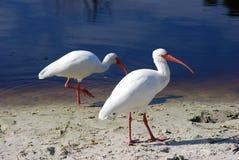 Pájaro 1 Foto de archivo libre de regalías