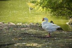 Pájaro 157 Fotos de archivo