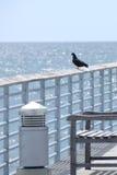 Pájaro imágenes de archivo libres de regalías