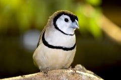 Pájaro Fotos de archivo