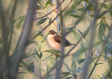 Pájaro Imagen de archivo libre de regalías