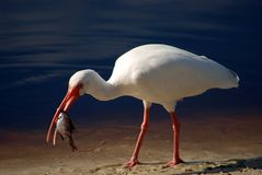 Pájaro 4 Fotografía de archivo libre de regalías