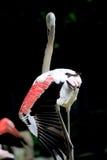 Pájaro Fotografía de archivo libre de regalías