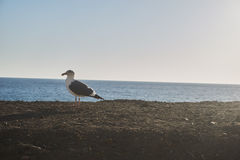 Pájaro Fotografía de archivo