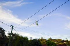 Pájaro acrobático al revés en un alambre contra el cielo Fotografía de archivo