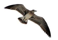 Pájaro aislado Imágenes de archivo libres de regalías