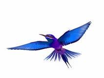 Pájaro aislado en vuelo en el fondo blanco Imágenes de archivo libres de regalías