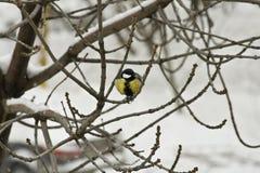 Pájaro amarillo brillante Imagenes de archivo