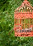 Pájaro anaranjado del pico en jaula al aire libre Fotos de archivo
