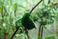 Pájaro animado verde Fotos de archivo libres de regalías