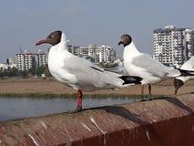 Pájaro asentado en un momento reservado imágenes de archivo libres de regalías