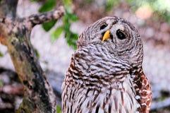 Pájaro, búho Imagen de archivo
