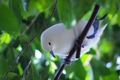 Pájaro blanco Fotografía de archivo