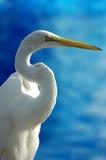 Pájaro blanco Foto de archivo