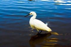 Pájaro blanco Imagenes de archivo