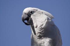 Pájaro blanco Foto de archivo libre de regalías