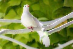 Pájaro blanco artificial Imagenes de archivo