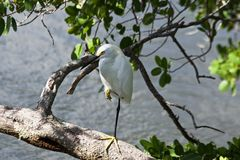 Pájaro blanco que se coloca en el agua imagenes de archivo