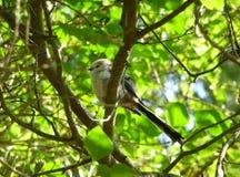 Pájaro blanco que se sienta en una rama Foto de archivo libre de regalías