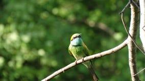 Pájaro bonito en Sri Lanka Foto de archivo libre de regalías
