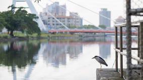 Pájaro, canal y puente Imágenes de archivo libres de regalías