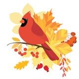 Pájaro cardinal Fotos de archivo