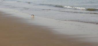 Pájaro cerca del mar Imagenes de archivo