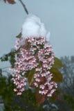 Pájaro-cereza Foto de archivo