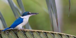 Pájaro coloreado 3 Foto de archivo