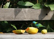 Pájaro colorido Imagen de archivo