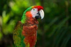 Pájaro colorido Imagenes de archivo