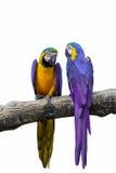 Pájaro colorido Imágenes de archivo libres de regalías