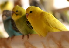 Pájaro colorido de los bunchies Fotos de archivo