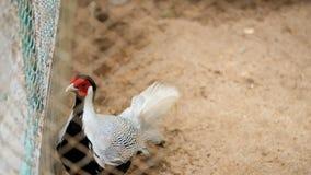 Pájaro colorido en jaula del parque zoológico Imagen de archivo
