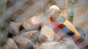 Pájaro colorido en jaula del parque zoológico Foto de archivo