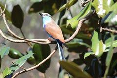 Pájaro colorido grande Fotos de archivo libres de regalías