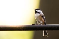 Pájaro con el espacio de la copia Fotografía de archivo