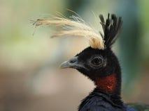 Pájaro con la cresta fotos de archivo libres de regalías