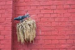 Pájaro con la pared de ladrillo roja Fotografía de archivo