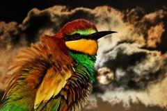 Pájaro con un plumaje colorido en el fondo de un cielo frío y de nubes Foto de archivo
