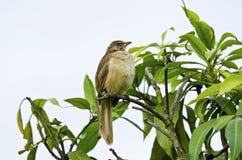 Pájaro cuatro Imágenes de archivo libres de regalías