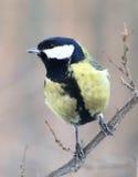 Pájaro curioso Fotografía de archivo