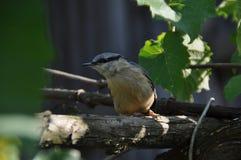 Pájaro curioso en una perca Imagen de archivo libre de regalías