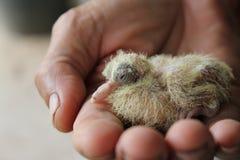 Pájaro de bebé Imagen de archivo libre de regalías