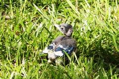 Pájaro de bebé Imágenes de archivo libres de regalías