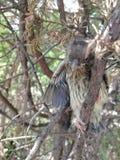 Pájaro de bebé pobre imagen de archivo