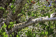 Pájaro de Brown en árbol Foto de archivo libre de regalías