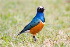 Pájaro de colores Imagen de archivo libre de regalías