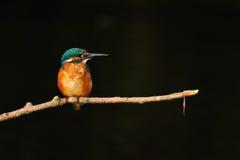 Pájaro de Colurful Fotografía de archivo