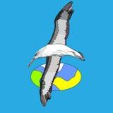 Pájaro de deslizamiento Fotos de archivo libres de regalías